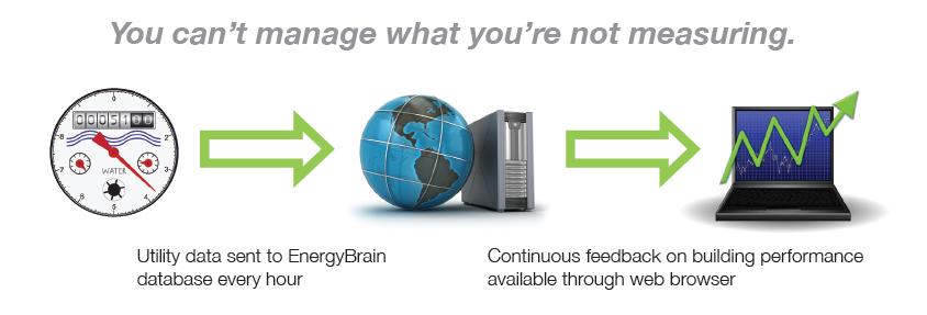 EnergyBrain1